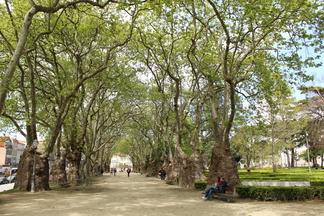 Jardim da Cordoaria